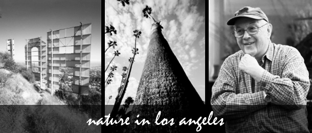 Bruce Davidson and Nature in Los Angeles