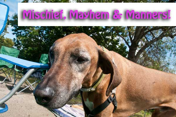 Dog Behavior Lecture: Mischief, Mayhem, and Manners